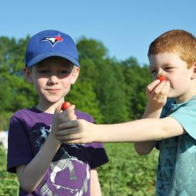 strawberry-picking-083